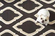 Honey looks so good on this rug!