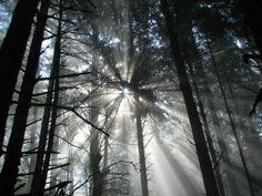 Morning sun in Northern California  #landscape #morning #northern #california #photography