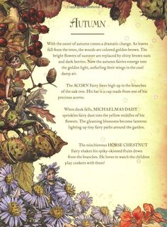 The Girls' Book of Flower Fairies: Cicely Mary Barker: 9780723262732: Amazon.com: Books