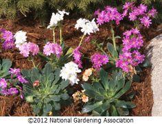 NGA Plant Finder :: National Gardening Association
