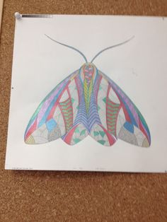 Our Foreign Rights Team Decorating Their Office With A Moth From Millie Marottas Animal Kingdom
