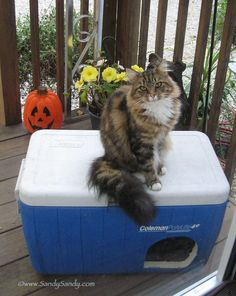 DIY Insulated Outdoor Cat Shelter made from a cooler, for Feral Cats Outside Cat Shelter, Outside Cat House, Feral Cat Shelter, Feral Cat House, Cat House Diy, Feral Cats, Animal Shelter, Cage Chat, Cool Cats