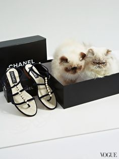 The Cat and the Flat for Vogue - Charlie and Tiramisu aka Susy in a Chanel box and Chanel pearled sandals l #shoes