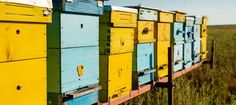 Beekeeping is a fun hobby that anyone can enjoy.