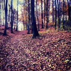 Lasy Oliwskie jesienią / #Oliwa Forests in #Fall, #Gdansk