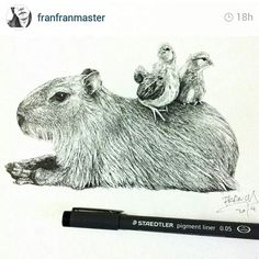 Excellent drawing of a Capybara!