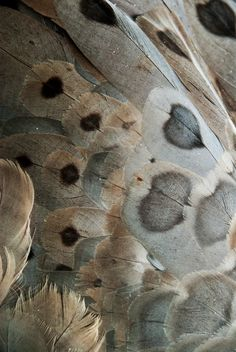 """Couleur : Gris et beige"" [color: grey and beige] Patterns In Nature, Textures Patterns, Color Patterns, Henna Patterns, Goose Feathers, Bird Feathers, Fotografia Macro, Natural Texture, Brown Texture"