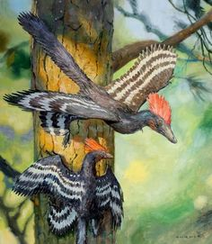 Microraptor Four-Winged Paravian Dinosaur from the Late Jurassic period, (about 160 million years ago) Drawn and Painted by James Gurney. Prehistoric Wildlife, Prehistoric World, Prehistoric Creatures, Wildlife Art, Feathered Dinosaurs, Dinosaur Art, Extinct Animals, Fossils, Mammals