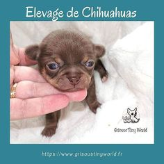 Image d'Instagram Le Chihuahua, Education Positive, Cute Puppies, French Bulldog, Dogs, Image, Instagram, Adopt A Puppy, Behavior