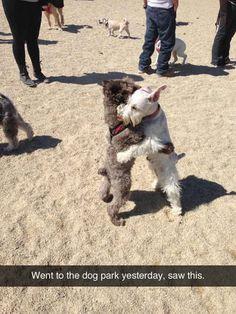 Los perros que creen en lograr la paz mundial.