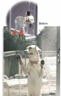 Pet Screen - Pet Proof Screening