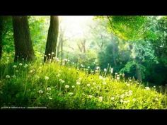 GUIDED MEDITATION - A Fairy Blessing & Healing Meditation (Remastered): This is such a beautiful meditation, especially for those whose imagination is very rich and colorful and who love to dream, with eyes open but also closed. Zen Meditation, Meditation Youtube, Yoga Youtube, Meditation Videos, Meditation Techniques, Relaxing Gif, Relaxing Music, Nature Sounds, Deep Relaxation
