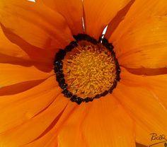 Panoramio - Fotos de Redi Pérez> Flores