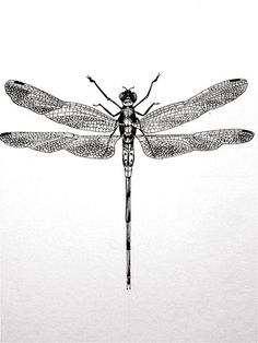 This series of thirteen consists of hand drawn, hand printed insects on the finest French Paper Co. Dragonfly Illustration, Dragonfly Drawing, Dragonfly Art, Dragonfly Tattoo, Tattoo Drawings, Pencil Drawings, Outline Drawings, Image Deco, Gravure Illustration