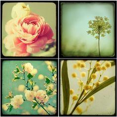 Flower photographs - TTV Flower Photo Set - Four fine art prints - spring, botanical, vintage colors, pastels