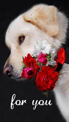 Imagen de un Perrito Con Flores Para Regalar A Mi Novia - Imagenes De Perros