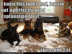 Hmm.....I'm not so sure I believe these tricksters!