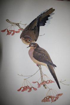 Love Doves !