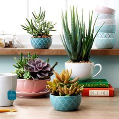 Snacks, sips and now #succulents. What can't mini bowls and mugs do? Shop this post through our profile link. #TargetStyle #Padgram