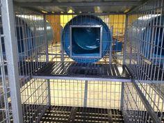 Above ground dog kennel