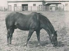 size: Photographic Print: Man O' War out to Pasture : All The Pretty Horses, Beautiful Horses, Man Of War, Sport Of Kings, Horse Ranch, Thoroughbred Horse, Racehorse, Horse Pictures, Horse Breeds