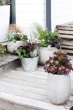 Container Plants, Container Gardening, Small Gardens, Outdoor Gardens, Garden Plants, House Plants, Summer Plants, Yard Design, Garden Inspiration