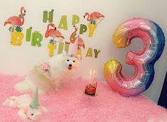 Japanese Spitz Dog, Spitz Dogs, Candles, Birthday, Outdoor Decor, Birthdays, Candy, Candle Sticks, Dirt Bike Birthday