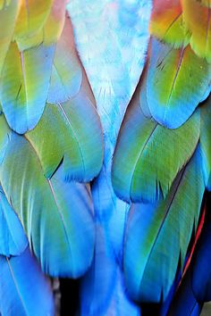 Parrot feather detail.
