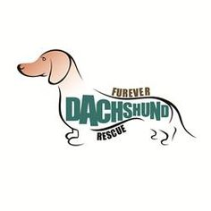 Forever Dachshund is in need of donations to help with donations for several of their furbabies with medical needs.  If you can help it will be greatly appreciated.