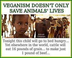 World by the Vegan Society Vegans care about people AND animals.- I am not yet vegan but this interested me.Vegans care about people AND animals.- I am not yet vegan but this interested me. Vegan Facts, Vegan Memes, Vegan Quotes, Why Vegan, Vegan Vegetarian, Vegan Raw, Vegan Food, Vegan Recipes, Going To Bed Hungry