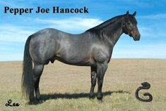 Pepper Joe Hancock. Hes blue roan & related to Cowboy. This color must run in the Hancock lines