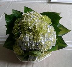 Simple hydrangea bouquet with hosta leaf and hydrangea leaf border.