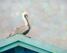 Pelican Art Seabird Photograph Bird Picture by PureNaturePhotos