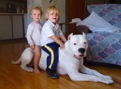 Dogo Argentino.. My Gemma girl is gonna get about this big. 70+ pounds. I'd dare someone to try and get close to my house with her around