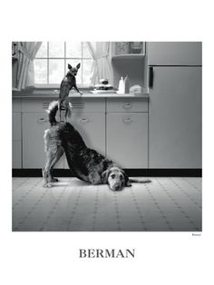Mom just got this print. Too funny. Looks just like her two dogs, Abby & Lainey.