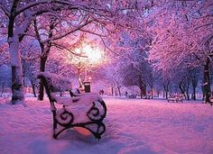 Snow covered park and bench at night make for a great picture ⛄