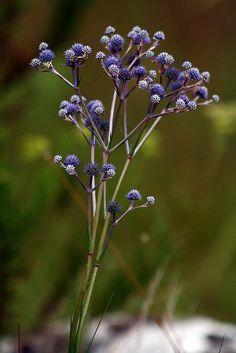 bouquet bokeh by Mathieu Struck, São José dos Ausentes, Rio Grande do Sul, Brazil, via Flickr