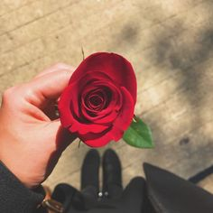 Beautiful Flowers Images, Flower Images, Love Flowers, Beautiful Roses, Aesthetic Roses, Red Aesthetic, Aesthetic Pictures, Flower Girl Photos, Girl Photo Poses