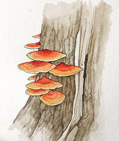 Part of my October mushroom series! Mushroom Paint, Mushroom Drawing, Watercolor Paintings, Watercolours, Book Illustration, Line Drawing, Foxtail Grass, Design Art, Stuffed Mushrooms