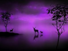 The deer at midnight