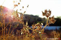 Flores em contraluz