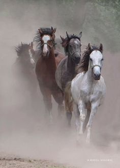 Film Background, Best Photo Background, Blue Background Images, Cowgirl And Horse, Horse Girl, Beautiful Horses, Animals Beautiful, Animals And Pets, Cute Animals