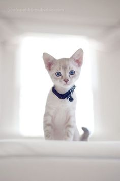 24 Cute Cat Pics for Your Monday Kittens And Puppies, Cute Cats And Kittens, I Love Cats, Kittens Cutest, Pretty Cats, Beautiful Cats, Animals Beautiful, Pretty Kitty, Hello Beautiful