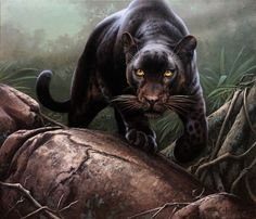 Animal Paintings by Fabrizio Caforio - Cruzine Wildlife Paintings, Wildlife Art, Animal Paintings, Animal Drawings, Animal Illustrations, Black Panther Cat, Black Panther Tattoo, Big Cats Art, Cat Art