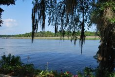 The view of the Ashley River from Drayton Hall Historic Site