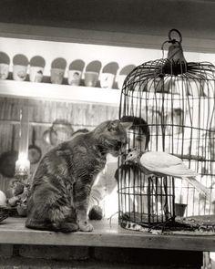 Résultats Google Recherche dimages correspondant à http://cache2.allpostersimages.com/p/LRG/36/3627/Y9XEF00Z/affiches/doisneau-robert-child-cat-and-dove.jpg