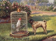 Parrot and Pug