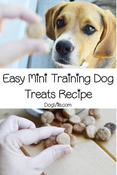 Small Dog Looking for the perfect homemade mini training dog treats recipe? You'll love this easy recipe! Find out how to make it! Dog Looking for the perfect homemade mini training dog treats recipe? You'll love this easy recipe! Find out how to make it! Dog Training Treats, Best Dog Training, Dog Treat Recipes, Healthy Dog Treats, Dog House Air Conditioner, Tiny Dog Breeds, Homemade Dog Toys, Dog Grooming Shop, Best Dog Toys