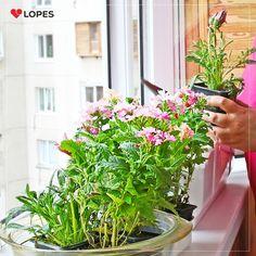 A primavera está chegando, mas você já preparou o jardim do seu imóvel para receber a estação mais florida do ano?  Ainda não? Então acesse o Blog da Lopes e veja as melhores dicas para ter um belo jardim florido.
