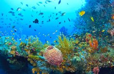 Places to learn to dive in Bali